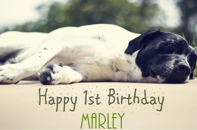 Marley turns 1