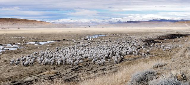 Tecka, Patagonia