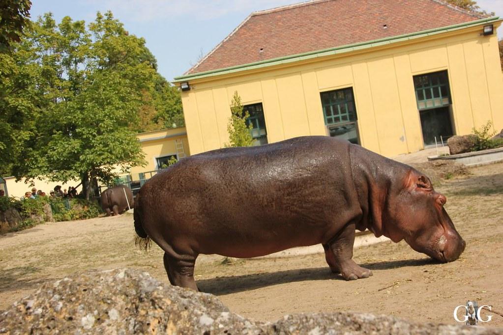 Ausflug Zoo Wien 26.08.201772