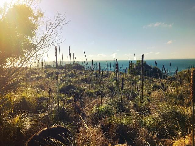 Hexham Island