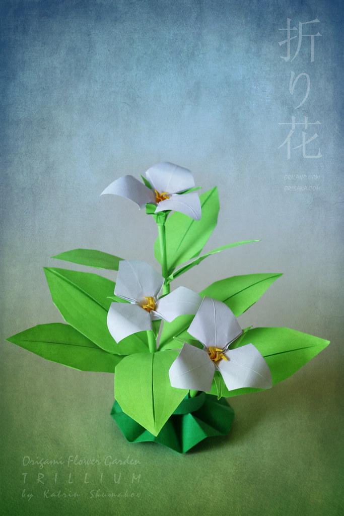 White Trillium - Ontario