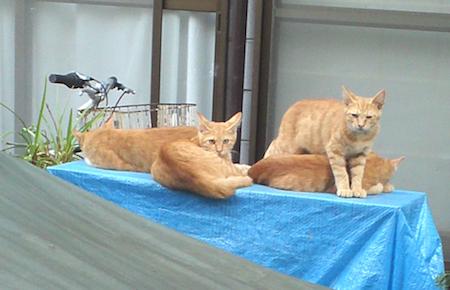 cat2454