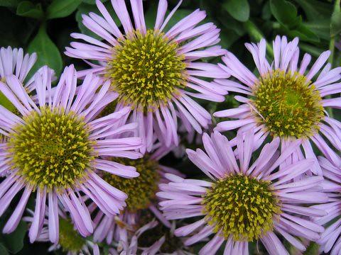 08 flowers