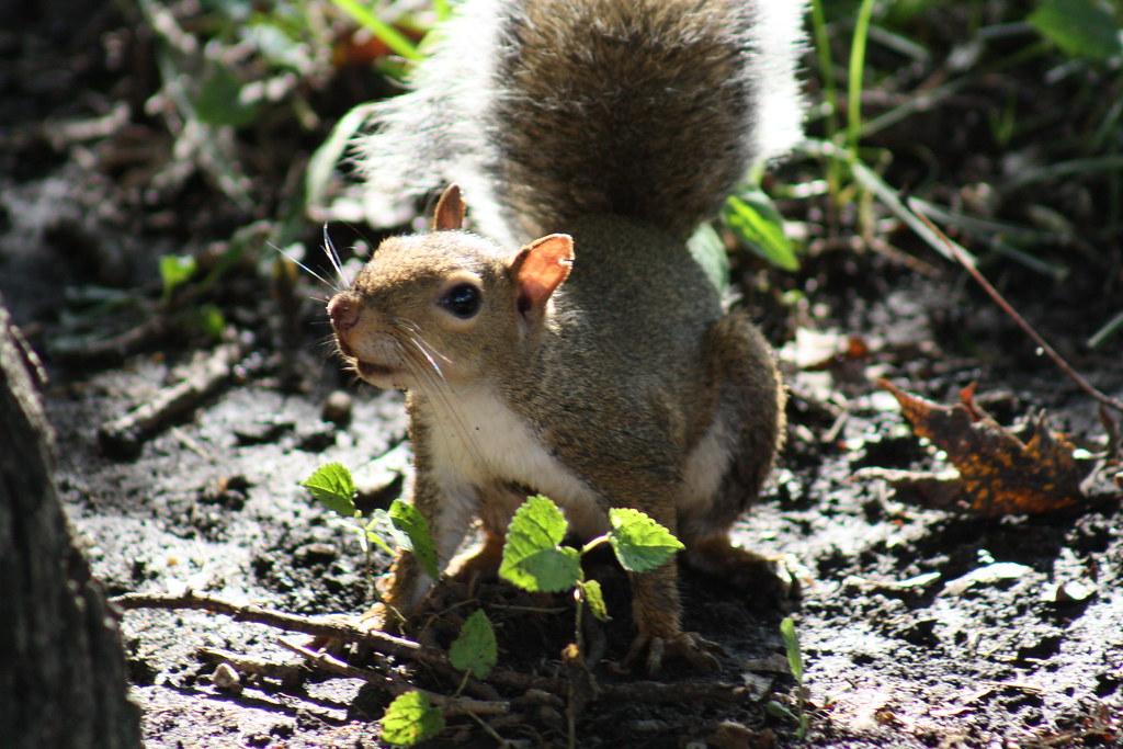 Squirrel Invasion 9