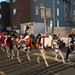 donkeys in bolton street