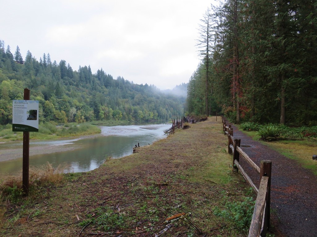 Eroding bank along the Sandy River