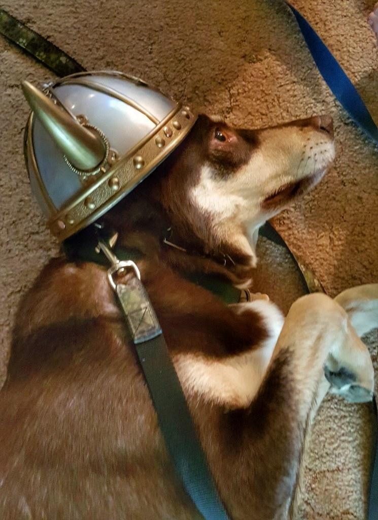 Thor Husky Viking