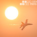 Hornet in the Sun by Steven Szabo