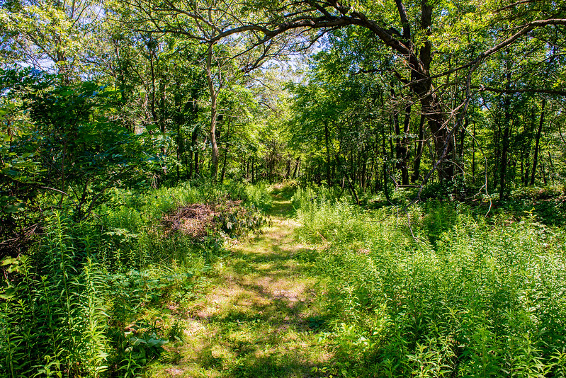 Coulter Nature Preserve - July 25, 2017