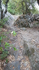 Montée du rocher du Fenouillet
