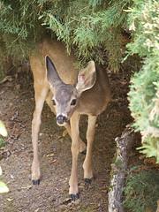 deer 20150731