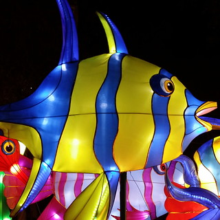 Fish at Chinese New Year in Sydney 2015