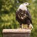 International Birds of Prey Centre (16)