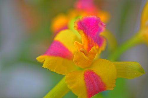 Pink & Yellow | by Kirt Edblom
