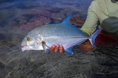 Aitutaki797