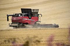 Farming at Westonbirt