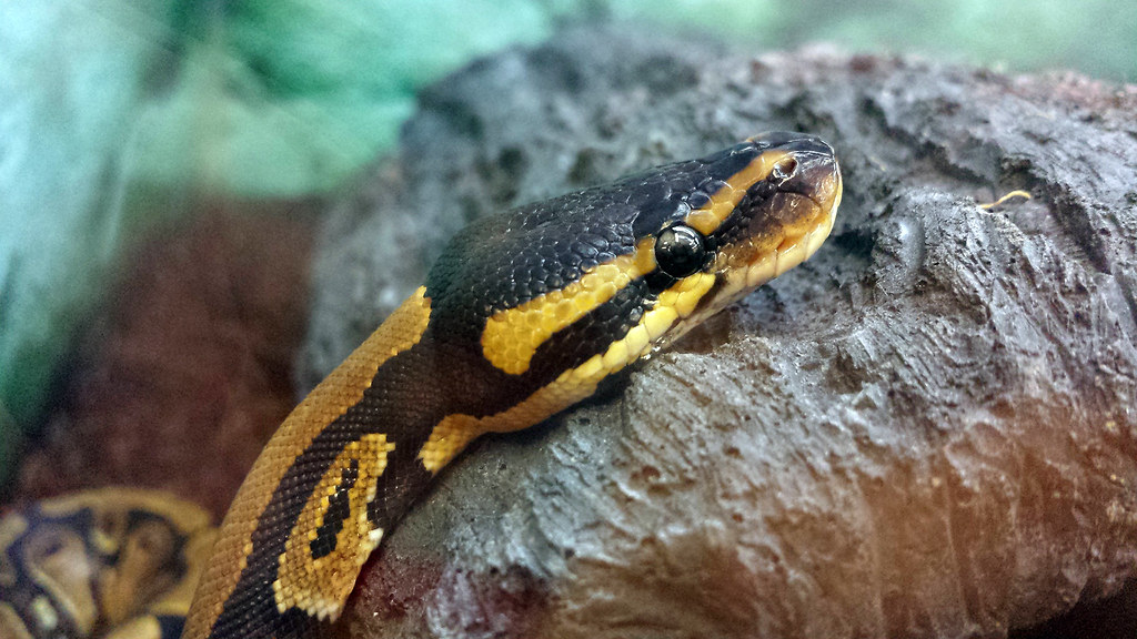Cold-blooded animals from the pet store
