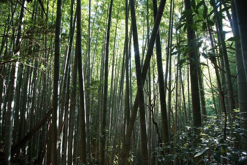 20161210-浜石岳-0415.jpg