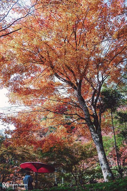 十年,京都四季 | 卷二 | 年月輪轉 | 22
