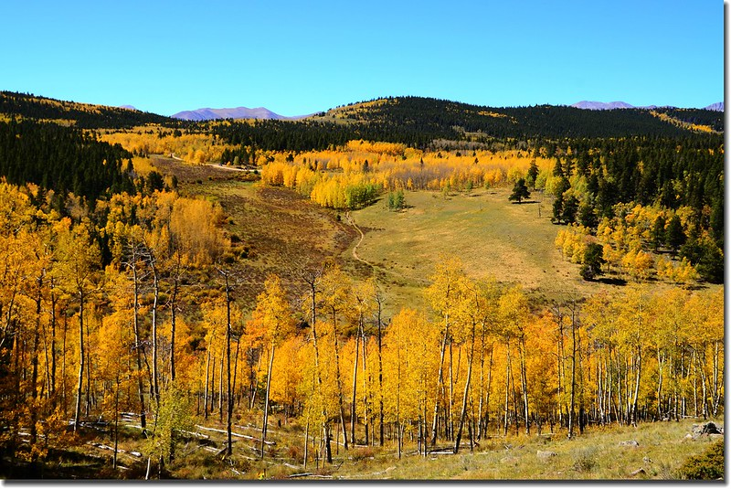 Fall colors, Kenosha Pass  (36)