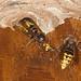 Begegnung am Nest | Hornisse (Vespa crabro) , NGIDn558384251