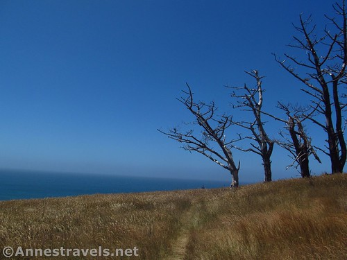 Trees and grassy headlands in Point Arena-Stornetta National Monument, California