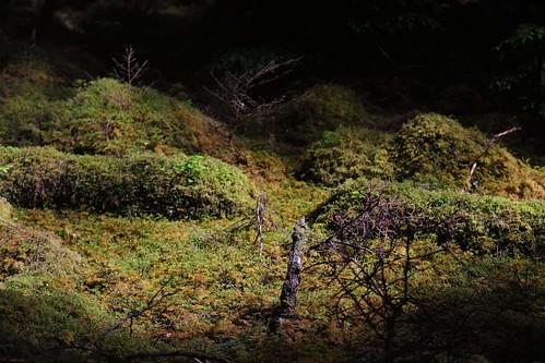 canon 6d 24105l canada haida gwaii wood forest light green moss trees outdoor jungle