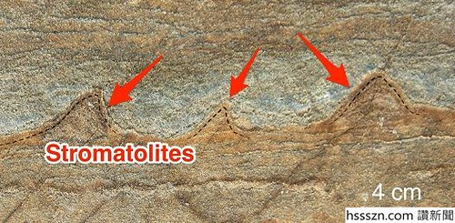 oldest-fossil-on-earth-stromatolite-3700-million-years-old-allen-nutman-nature-labeled_527_258