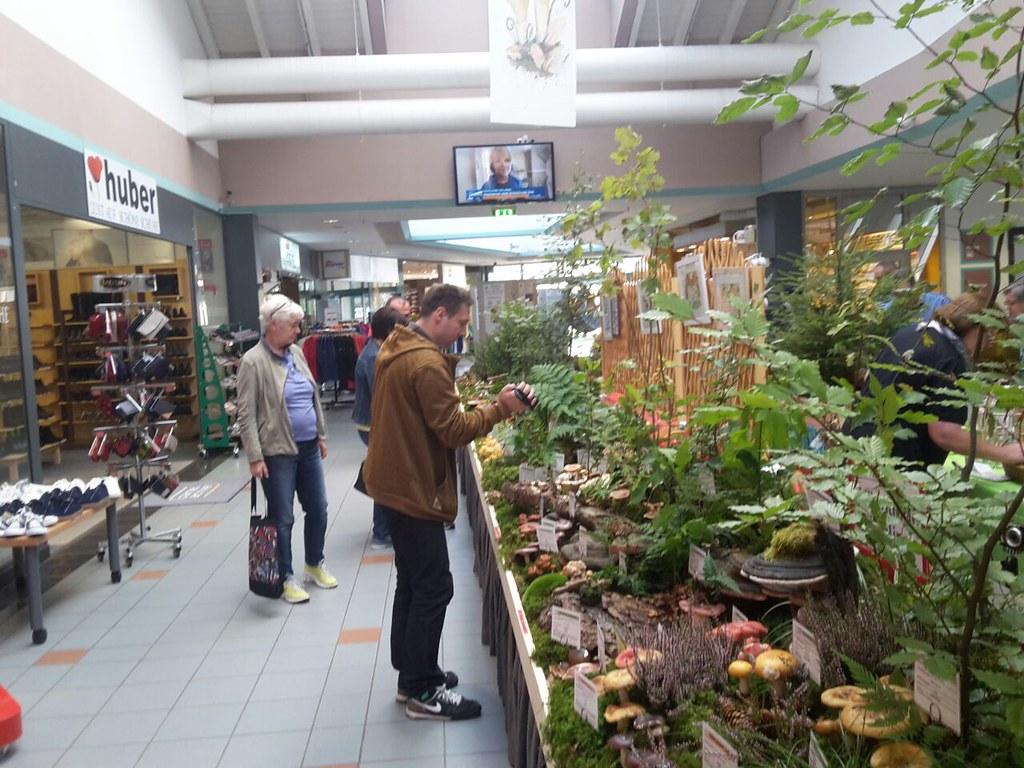 Pilzausstellung 2017 - Die Ausstellung