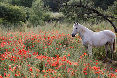 Camargue - Photo of Carnas