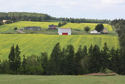 wheatleyriver pei canada farms fields yellow crops hills view