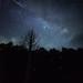 Galactic Flight Firefly by masahiro miyasaka