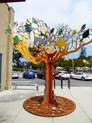 Joe Cosentino - What Makes A Tree