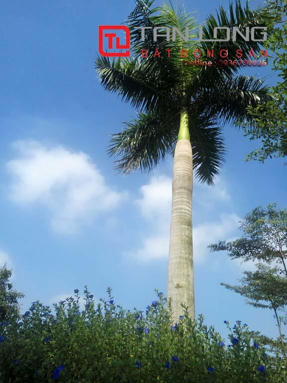 """Pruksa Town An Đồng - công viên cây xanh  <img src=""""images/"""" width="""""""" height="""""""" alt=""""Công ty Bất Động Sản Tanlong Land"""">"""