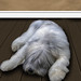 Let sleeping dogs ! by Palmsgb