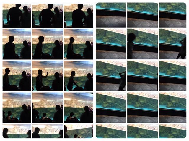 鹿鹿的海生館攝影集,充滿freestyle與揮霍記憶體只為神秘的一刻的大器