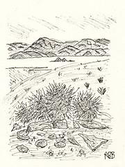 Barrel Cactus, Racetrack Valley