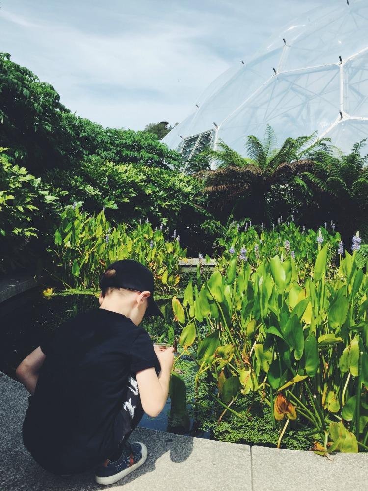 Eden Project Pond