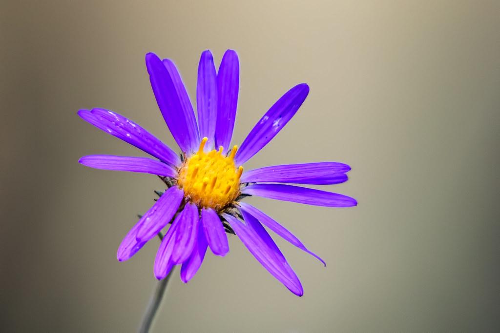 Wild-Flowers-4-7D2-090717