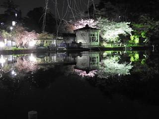 千葉公園綿打池 夜桜ライトアップ17