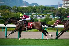 Fine Needle - The Centaur Stakes (Hanshin Racecourse)