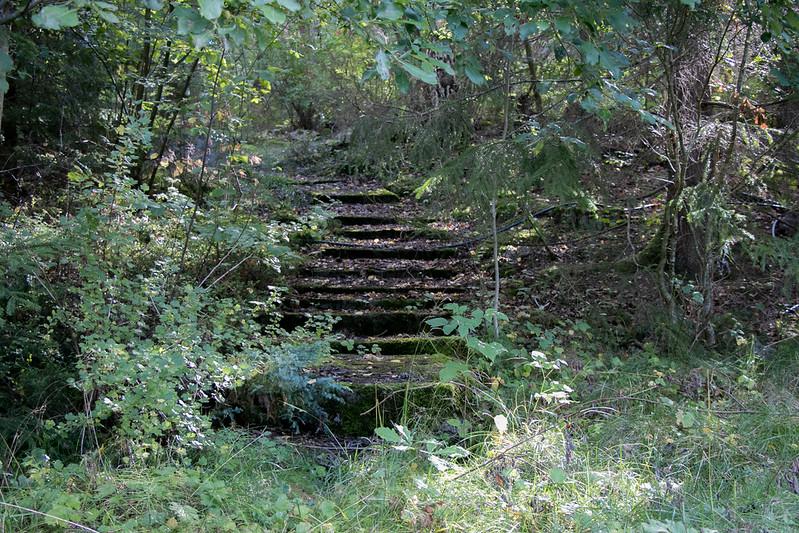 skog8