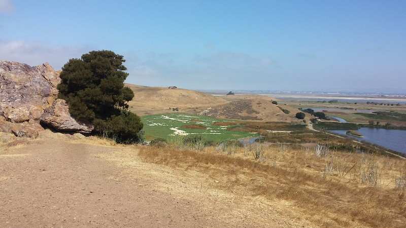 Hilltop view, Coyote Hills Park