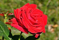 062317 Red Butte Gardens 159