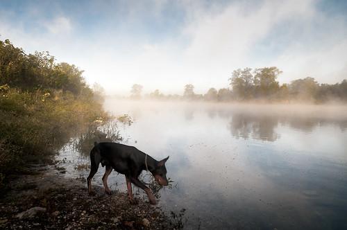 zagreb croatia sava savariver river riverside fog doberman dog dogs clouds cloudysky sunrise fishing trees water hrvatska domovinskimost žitnjak pertuševec petruševac blue