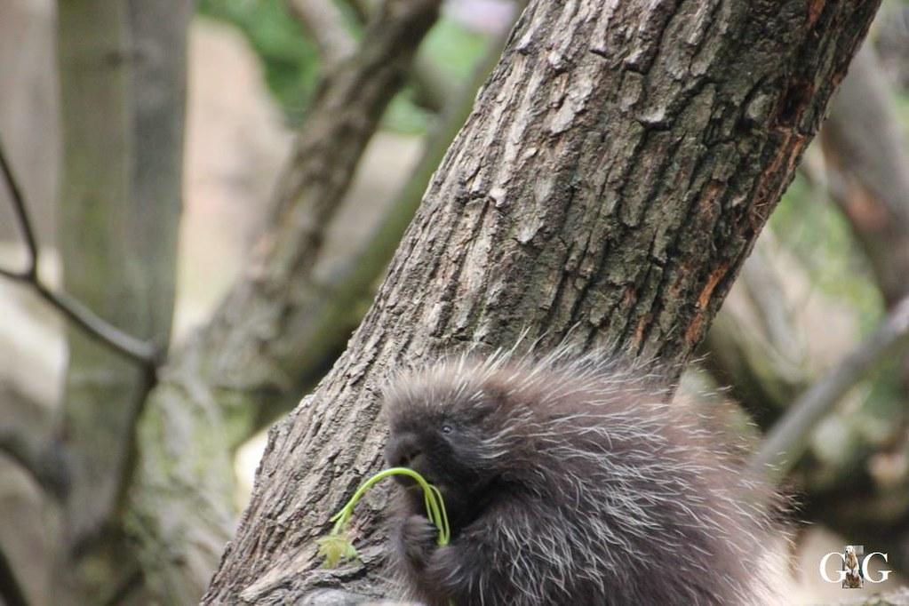 Besuch Tierpark Friedrichsfelde 20.08.172