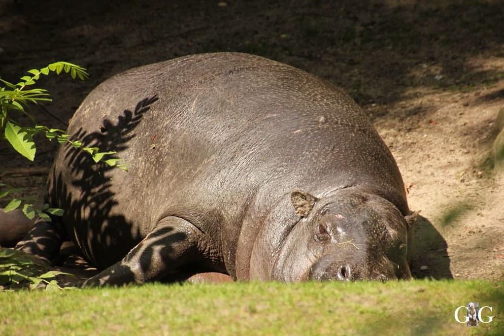 Besuch Zoo Berlin 13.08.17129