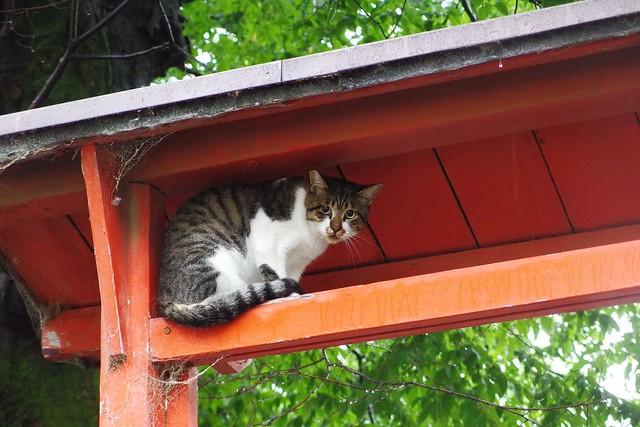 Today's Cat@2017-09-12