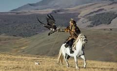 eagle landing on hunters arm