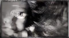 Doll's eye(s)-11474